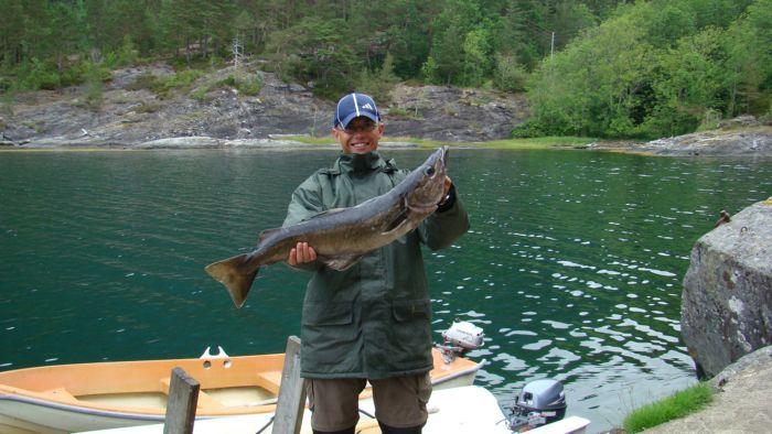 hardanger-fjord-pollack-90cm-8-5-pfund-juli-2008